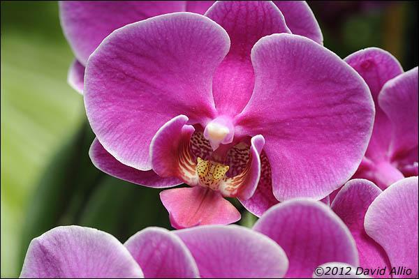 Orchids | ©2012 David Allio