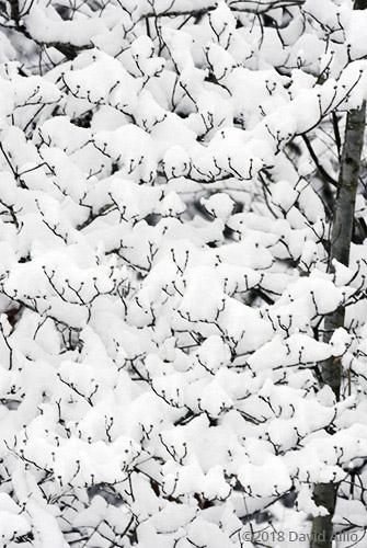 Cotton patterns Upstate Snow South Carolina